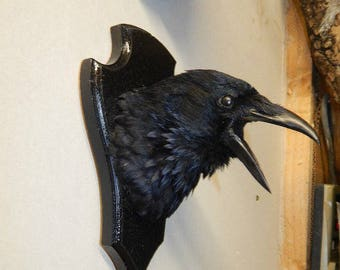 Taxidermy crow -Best seller -Made to order-best seller