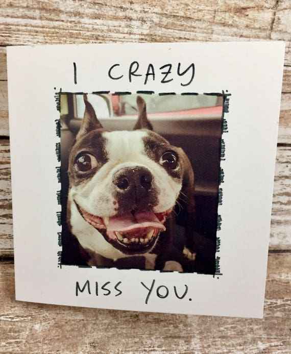 Miss you card, blank card, i miss you, miss you blank card, funny card, dog card, funny dog card, greeting card, unique card