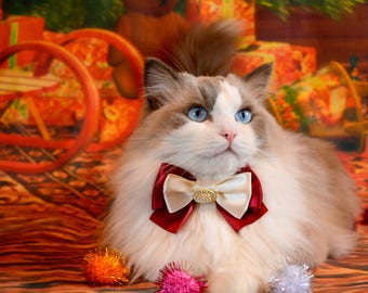 Fancy Cat Bow tie with Collar -  cat bow tie with adjustable collar - Luxury satin bow tie with breakaway collar