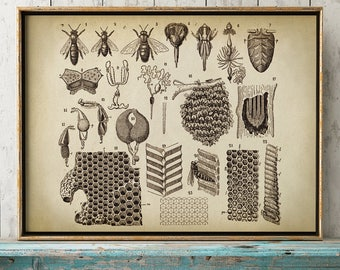 BEEKEEPING Poster Beekeeper Chart Print Apiculture Art Illustration Bee Home Decor Honey