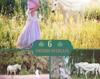 6 Unicorn overlay, White horse Overlays,Pegasus Animal PNG Digital Overlays, Realistic Unicorns, digital backdrop, Magical unicorn Fantasy