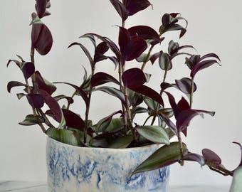 Ceramic Planter, Plant lovers gift, Plant Pot