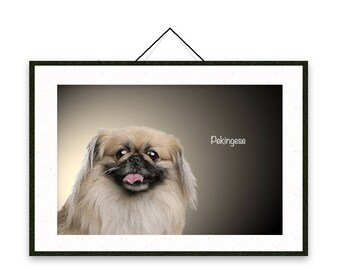 Pekingese - Dog breed poster, wall sticker, nursery decor, dog print, wall print, nursery print, shabby print   Tropparoba - 100% made Italy
