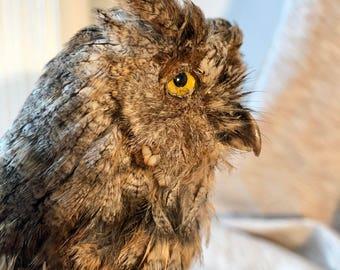 Antique Eurasian Scop Owl (Otus Scops) Taxidermy Hibou petit duc Taxidermie Naturalisé Empaillé