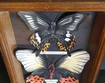 Butterflies framed