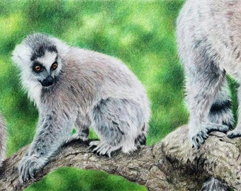 Lemur print, limited edition, hand signed fine art giclee print - 'Usual Suspects'
