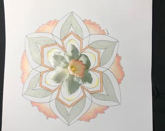 Narcissus mandala