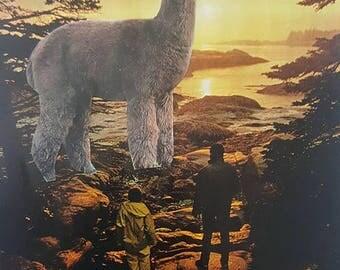 father, son, alpaca collage