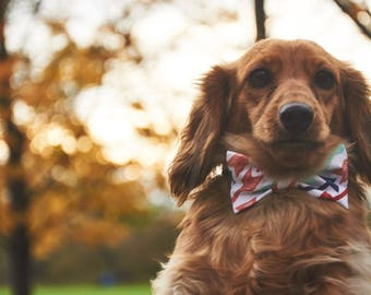 Dog Bow Tie | Pointer | Free Shipping to Canada