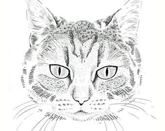 Cat portrait, original drawing.