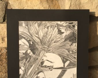 Flower Drawing - Flower