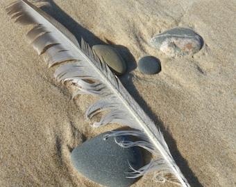 Lake Michigan's Quill  (digital download)