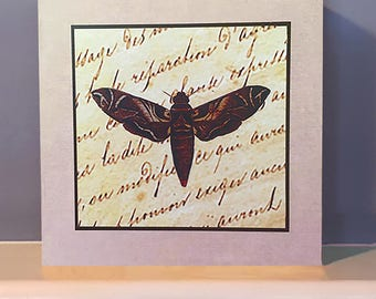 Moth image with text on Wooden Wall Art.  Dragonfly gift. Wooden box.  Insect art.
