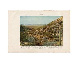 c. 1934 ARIZONA DESERT PRINT - vintage botanical print - plant print - old  print - vintage lithograph of flora - cactus - Santa Cruz mtn.