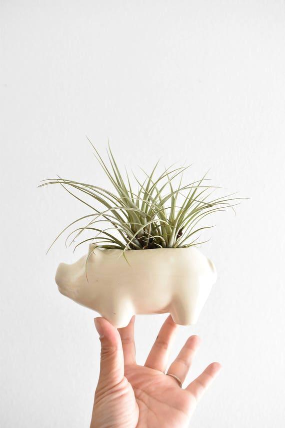 vintage ceramic white pig piggy figurine planter / air plant vase