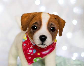 Jack Russell Terrier Milo