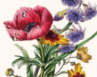 Botanical Art Print. Flower Print. Housewarming Gift. Guest Bedroom Decor. Garden Flower Decor. Bouquet Of Flowers. Hallway Wall Art. Gifts