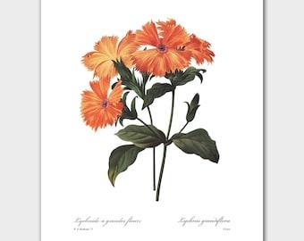 Flower Prints Wall Art Flowers (Orange Home Decor, Botanical Print) -- Pierre Redoute