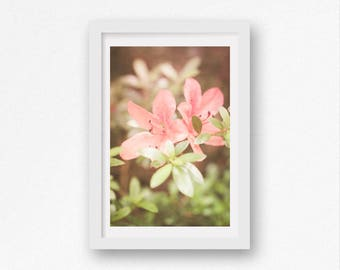 Pink Azaleas Rhododendrons Flowers Photography Print Spring Photograph Dreamy Feminine Nature Photo Floral Wall Art Decor