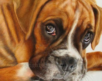 """Boxer's Eyes beautiful original coloured pencil drawing A4 9""""x13"""""""