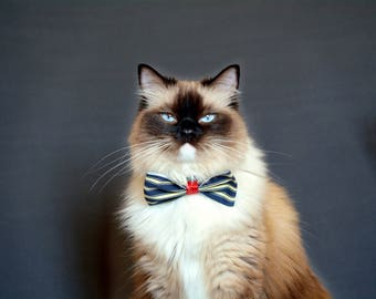 Steampunk inspired cat bow tie