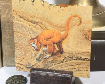 Hand Painted Orangle Tamarin Monkey on Jasper Stone, Wild Life Home Decor