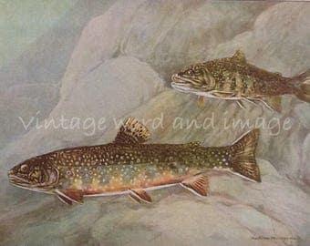 1924 Brook Trout & White Perch Art Print Vintage Fish Lithograph Home Office Fishermen's Decor Watercolor Murayama Lake River Beach House