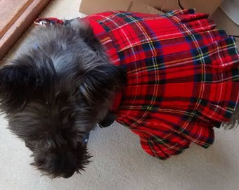Tobydog Wearing His Kilt ( not for sale , just for fun !)