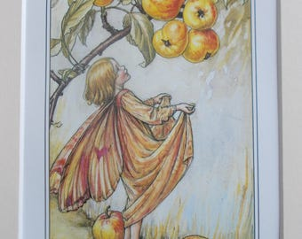 CRAB-APPLE  Flower Fairy, Cecily Mary Barker in 10in x 8in Ivory Mount VINTAGE 8in  x 6in  Print