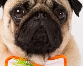 Easter carrott Bow Tie