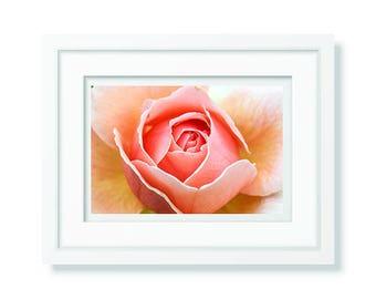 Roses Download Digital Floral Photography Roses Canvas Print Macro Nature Digital Fine Art Wall Art Home Decor Flower Print Canvas