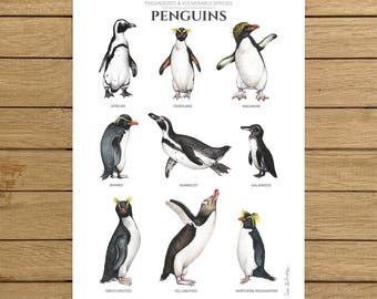 Penguin Poster, Endangered Species, Watercolor Illustration, Giclée Print, A3 or A4 size