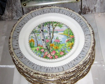 "Beautiful Royal Albert - Silver Birch - Lunch Plates 9 1/8"" (9)"