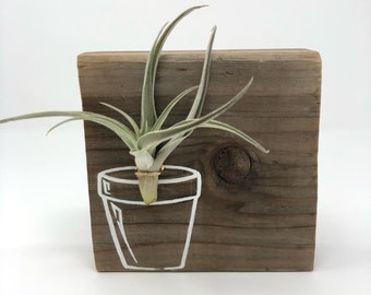 Airplant / Tillandsia reclaimed wood art with pot illustration decoration