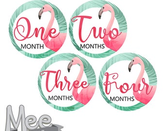 Flamingo baby month stickers,Baby Girl Month Stickers Monthly Baby Stickers Milestone Baby Month Stickers Baby Girl summer Baby Shower Gift