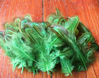 set of 50 feathers PHÉAS