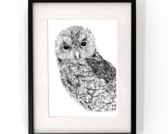 Ga'Hoole - Owl Print - Limited Edition Print of 200 - Owl Drawing - Black/White  print from original Drawing