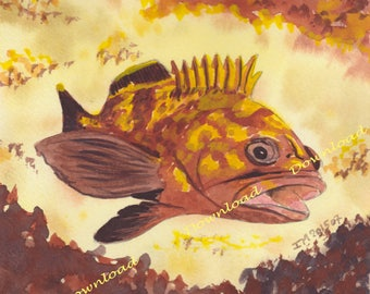 Dowload of Grouper fish-Animal Watercolor