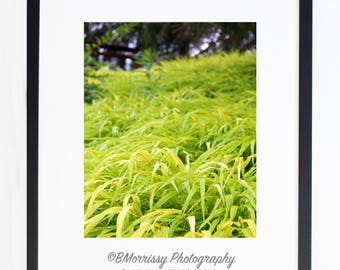 Cascading Plant Photograph, Wall Art, Home Decor - Contemporary - Green Plant, Ground Cover, Photography, Gift, Modern Wall Hanging