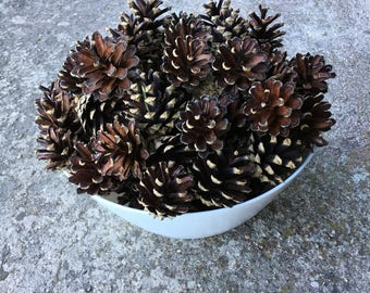 Pinecones pine cone home decor Vase fillers christmas