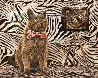 Senior Cat Photographer. Digital image for download, wallpaper, screen saver for PC, Mac.