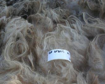 Drents Heideschaap raw fleece. 1.4kg/3.09lb
