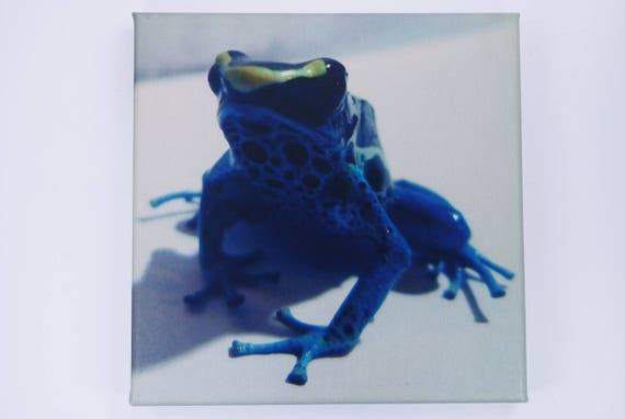 Sale picture frog in blue-Dendrobates tinctorius Patricia-photography art Print on canvas 20 x 20 cm-Wall decoration art B-ware