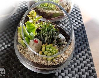 Oblique Cut Succulent Terrarium, Succulent Centerpiece, Succulent Gift