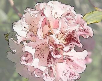 Rhododendron, YO11