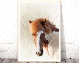 Horse Print, Horse Wall Art, Horse Photography, Horse Photo, Equestrian Decor, Icelandic Horse, Equine Art, Cottage Wall Art, Large Wall Art
