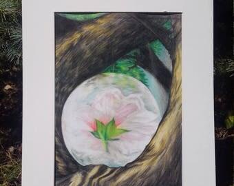 Blossom Signed Print