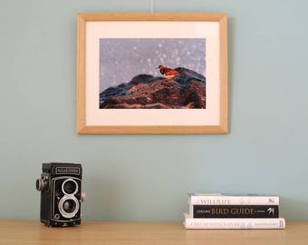 Photographic Art Print framed Turnstone and sea spray Nature