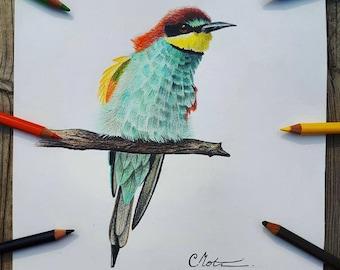 Illustration original bird / Original Bird Drawing