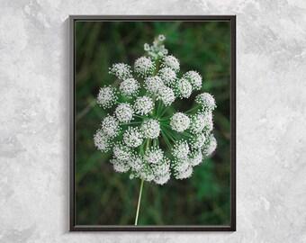White flower Nature Photography, Flower Photo Prints, Flower Digital Art, Botanical Art, White Wild Flower, Botanical Art Work, Flower Decor